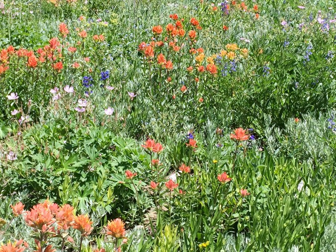 photo of colorful wildlflowers