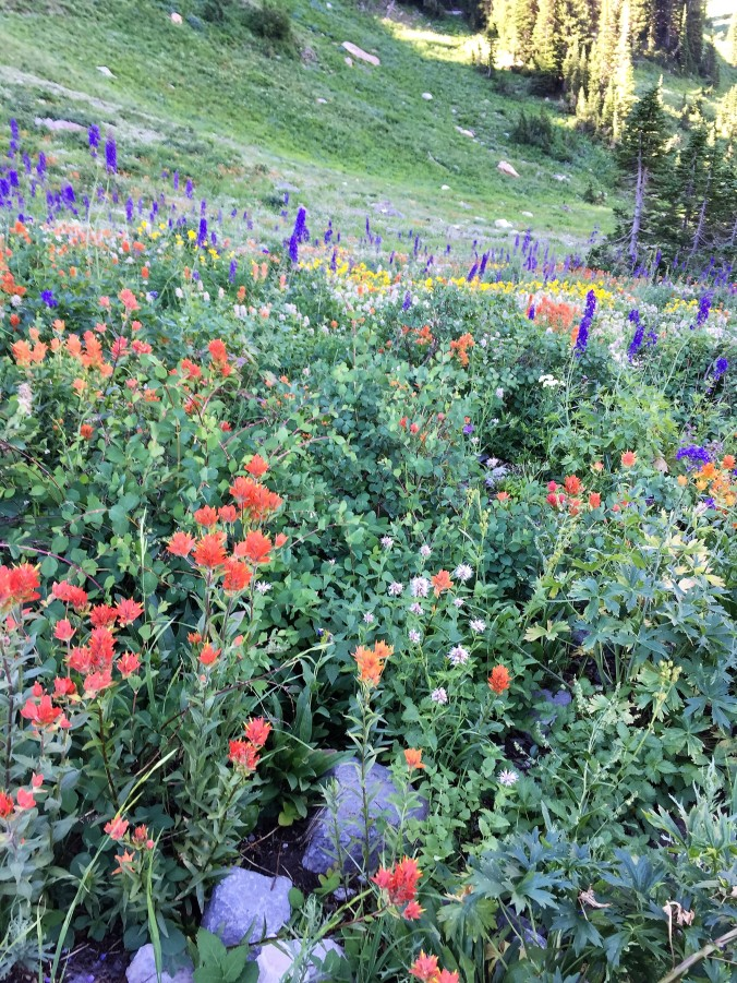 mix of colorful wildflowers